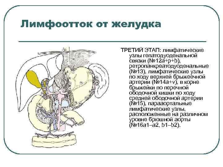 Лимфоотток от желудка ТРЕТИЙ ЭТАП: лимфатические узлы гепатодуоденальной связки (№ 12 a+p+b), ретропанкреатодуоденальные (№