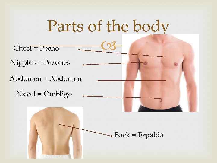 Parts of the body Chest = Pecho Nipples = Pezones Abdomen = Abdomen Navel