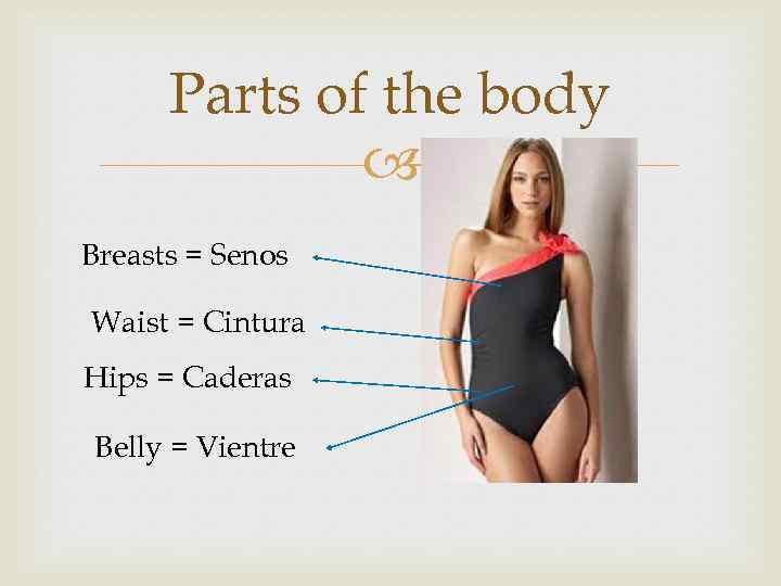 Parts of the body Breasts = Senos Waist = Cintura Hips = Caderas Belly