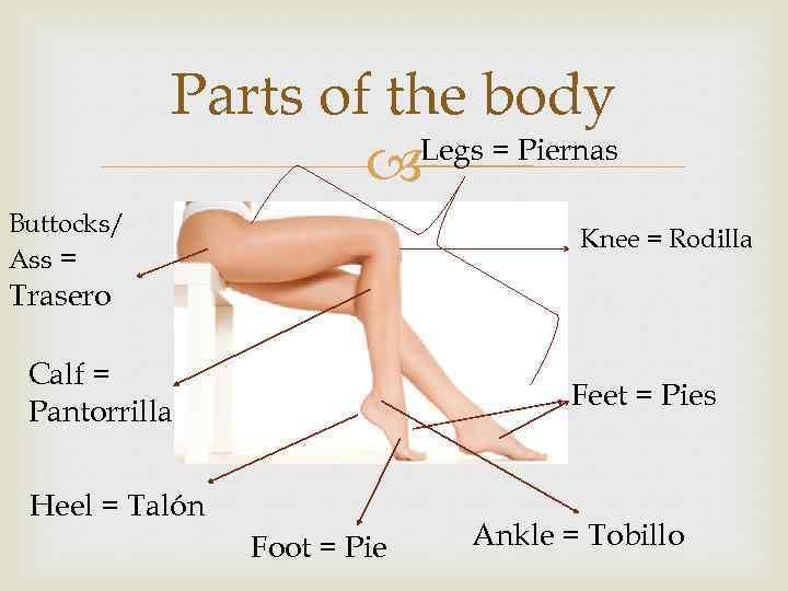 Parts of the body Legs = Piernas Buttocks/ Ass = • Knee = Rodilla