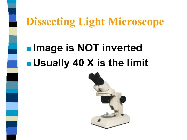 Dissecting Light Microscope n Image is NOT inverted n Usually 40 X is the