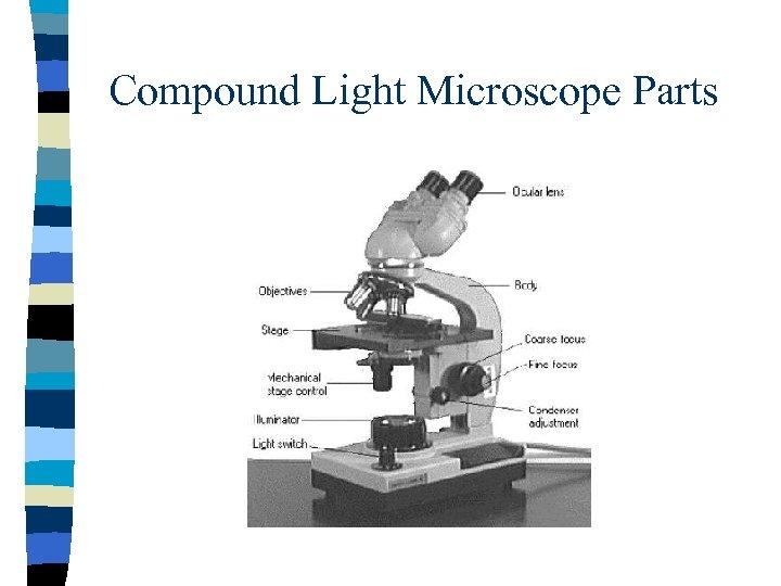 Compound Light Microscope Parts