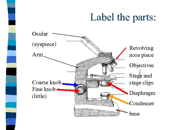 Label the parts: Ocular (eyepiece) Arm Revolving nose piece Objectives Coarse knob Fine knob