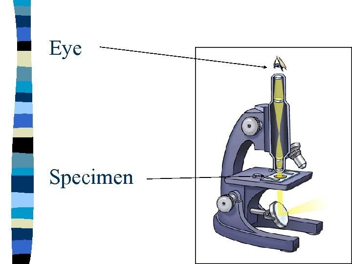 Eye Specimen