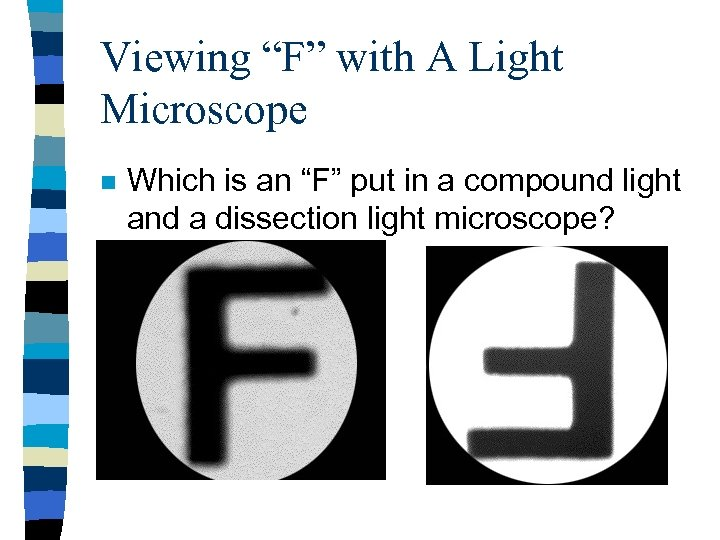"""Viewing """"F"""" with A Light Microscope n Which is an """"F"""" put in a"""