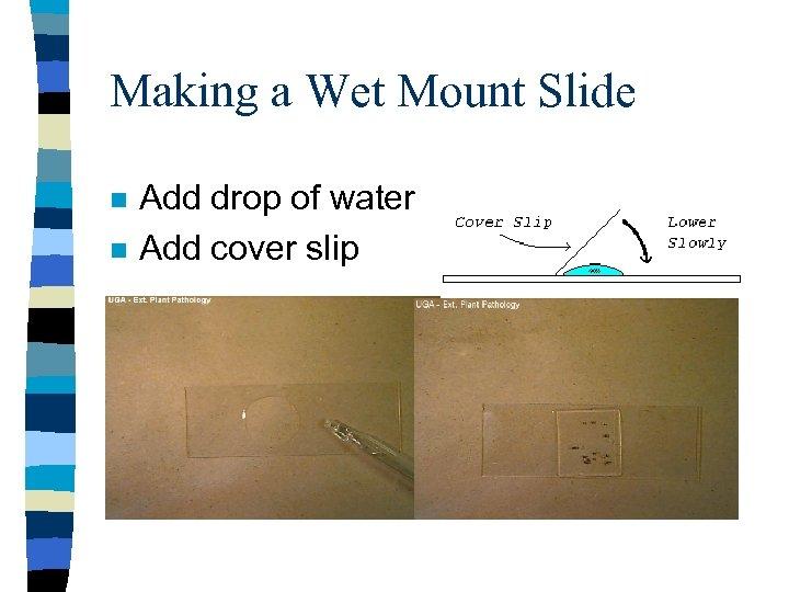 Making a Wet Mount Slide n n Add drop of water Add cover slip