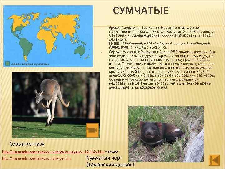 СУМЧАТЫЕ • • Ареал: Австралия, Тасмания, Новая Гвинея, другие прилегающие острова, включая Большие Зондские