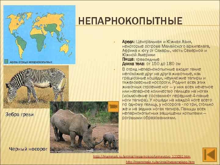 НЕПАРНОКОПЫТНЫЕ • • Зебра греви Ареал: Центральная и Южная Азия, некоторые острова Малайского архипелага,