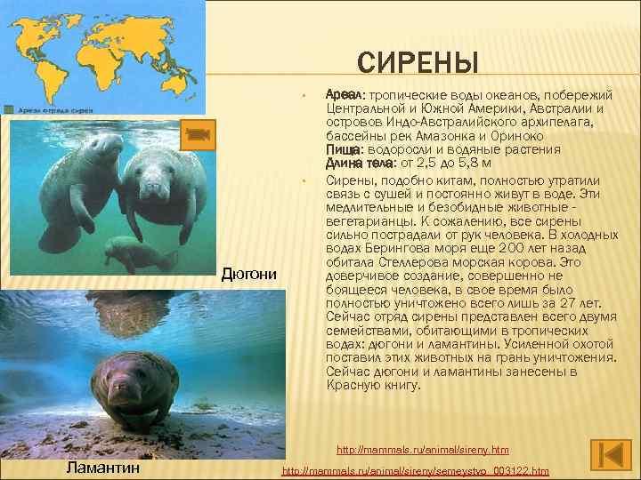 СИРЕНЫ • • Дюгони Ареал: тропические воды океанов, побережий Центральной и Южной Америки, Австралии