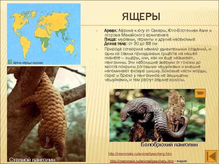 ЯЩЕРЫ • • Ареал: Африка к югу от Сахары, Юго-Восточная Азия и острова Малайского