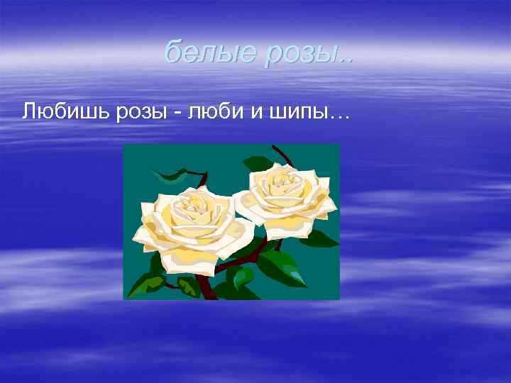 белые розы. . Любишь розы - люби и шипы…