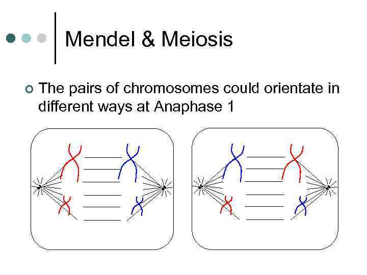 Mendel & Meiosis ¢ The pairs of chromosomes could orientate in different ways at