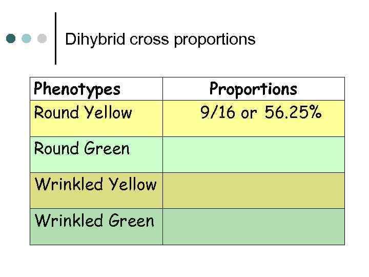 Dihybrid cross proportions Phenotypes Round Yellow Round Green Wrinkled Yellow Wrinkled Green Proportions 9/16