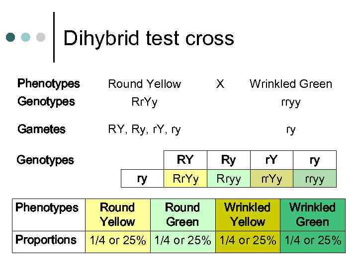 Dihybrid test cross Phenotypes Genotypes Round Yellow Rr. Yy Gametes RY, Ry, r. Y,