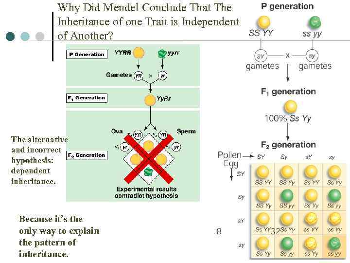 Why Did Mendel Conclude That The Inheritance of one Trait is Independent of Another?