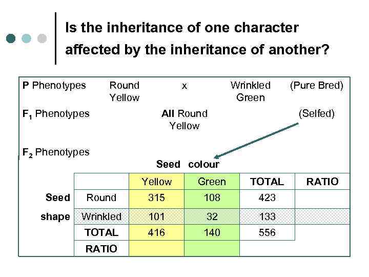 Is the inheritance of one character affected by the inheritance of another? P Phenotypes