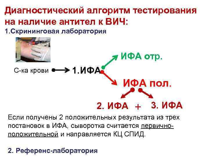 Диагностический алгоритм тестирования на наличие антител к ВИЧ: 1. Скрининговая лаборатория ИФА отр. С-ка