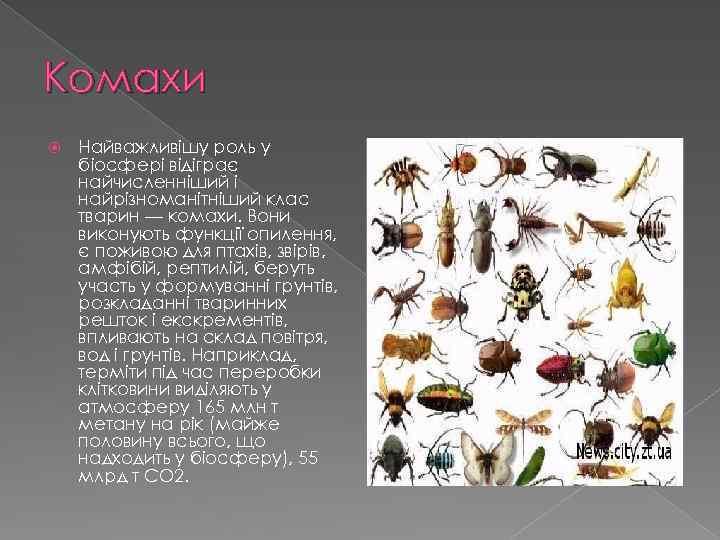 Комахи Найважливішу роль у біосфері відіграє найчисленніший і найрізноманітніший клас тварин — комахи. Вони