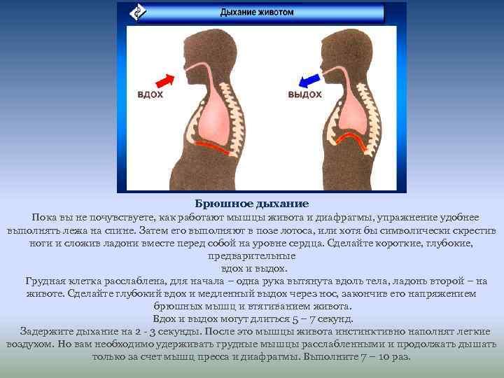 Брюшное дыхание Пока вы не почувствуете, как работают мышцы живота и диафрагмы, упражнение удобнее