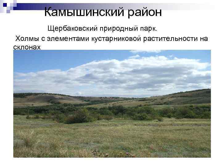Камышинский район Щербаковский природный парк. Холмы с элементами кустарниковой растительности на склонах