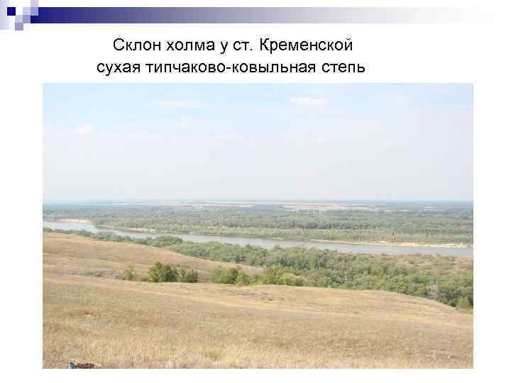 Склон холма у ст. Кременской сухая типчаково-ковыльная степь