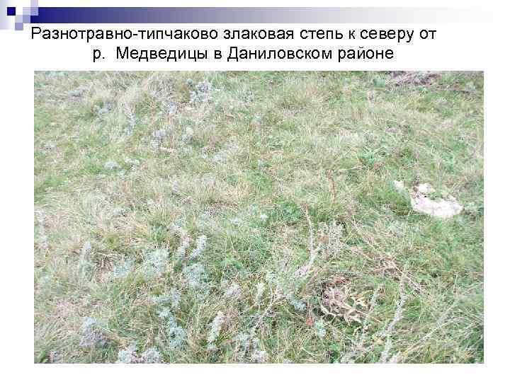 Разнотравно-типчаково злаковая степь к северу от р. Медведицы в Даниловском районе