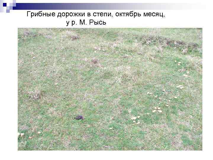 Грибные дорожки в степи, октябрь месяц, у р. М. Рысь