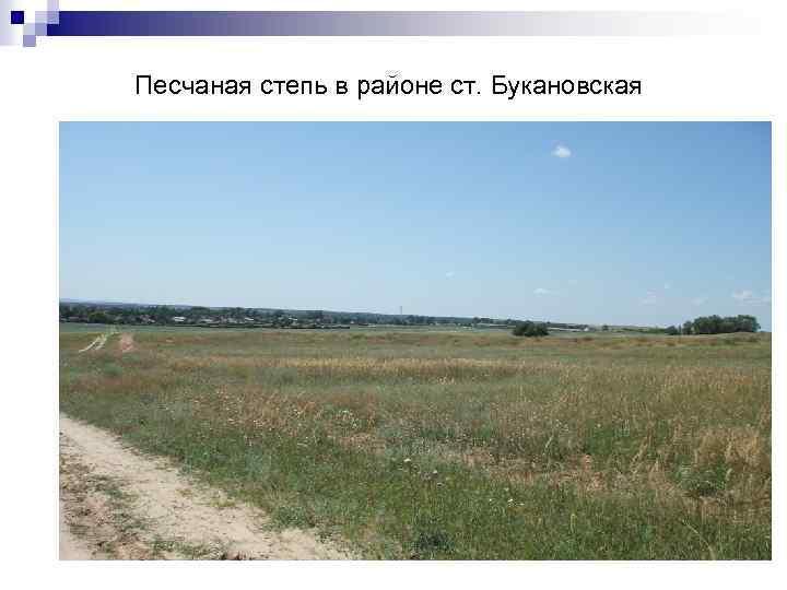 Песчаная степь в районе ст. Букановская