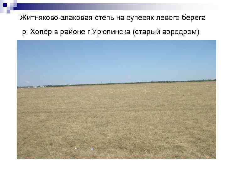 Житняково-злаковая степь на супесях левого берега р. Хопёр в районе г. Урюпинска (старый аэродром)