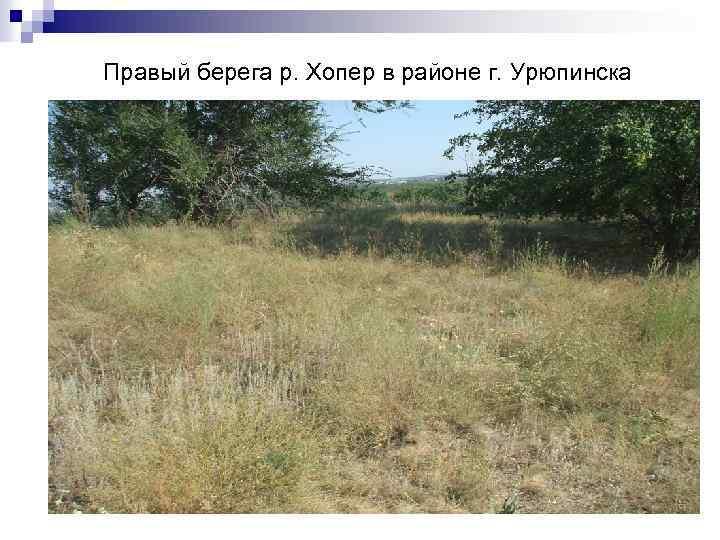 Правый берега р. Хопер в районе г. Урюпинска