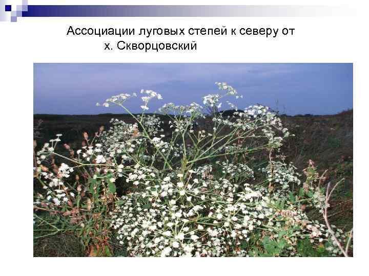 Ассоциации луговых степей к северу от х. Скворцовский