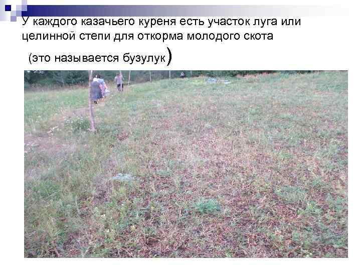 У каждого казачьего куреня есть участок луга или целинной степи для откорма молодого скота