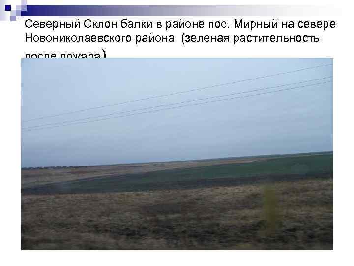 Северный Склон балки в районе пос. Мирный на севере Новониколаевского района (зеленая растительность после