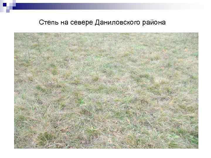 Степь на севере Даниловского района