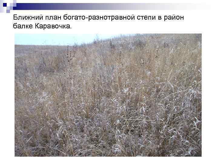 Ближний план богато-разнотравной степи в район балке Каравочка.