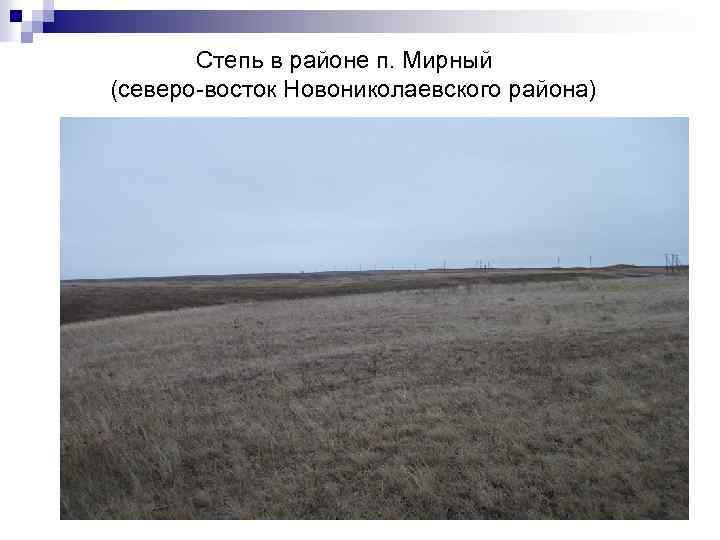 Степь в районе п. Мирный (северо-восток Новониколаевского района)