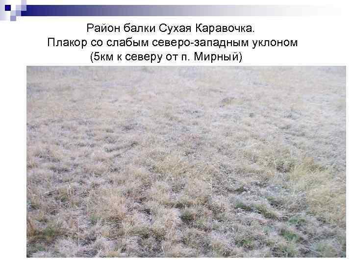 Район балки Сухая Каравочка. Плакор со слабым северо-западным уклоном (5 км к северу от