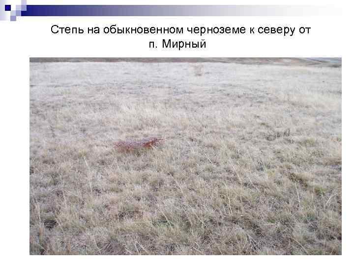 Степь на обыкновенном черноземе к северу от п. Мирный