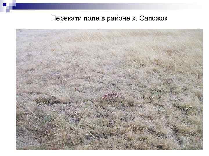 Перекати поле в районе х. Сапожок