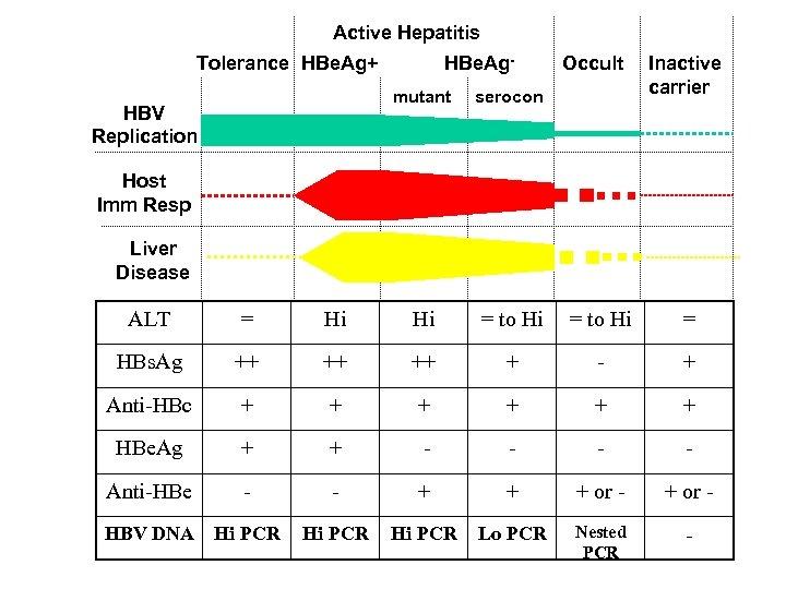 Active Hepatitis Tolerance HBe. Ag+ HBe. Ag- Occult mutant serocon HBV Replication Inactive carrier