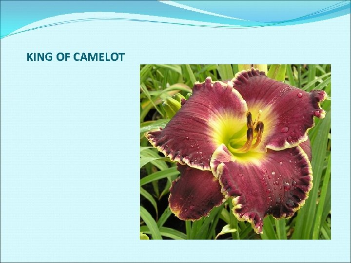 KING OF CAMELOT