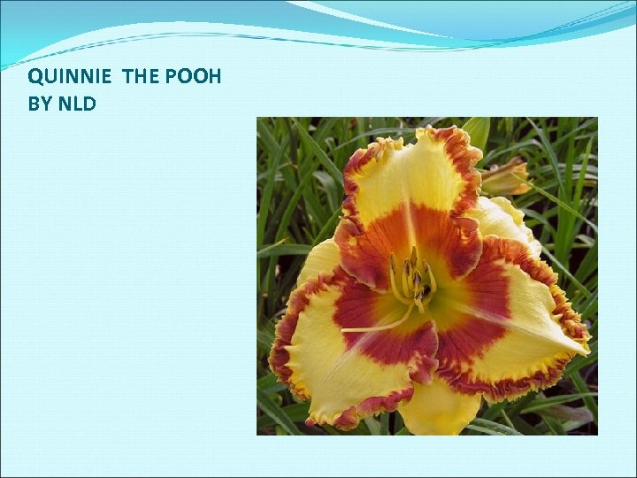 QUINNIE THE POOH BY NLD