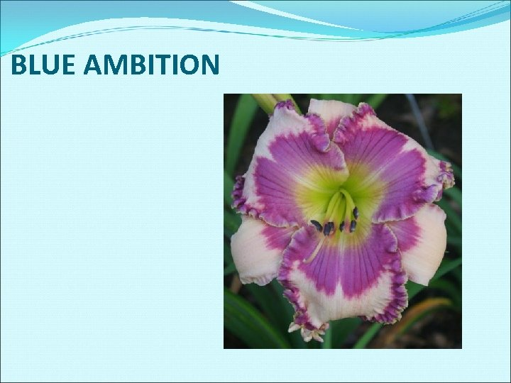 BLUE AMBITION