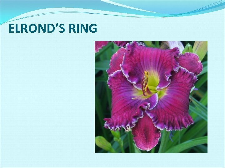 ELROND'S RING