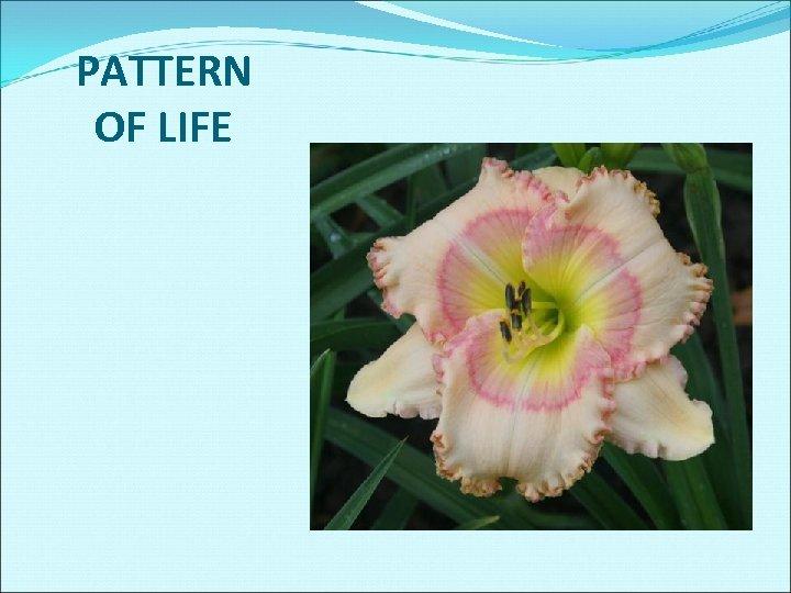PATTERN OF LIFE