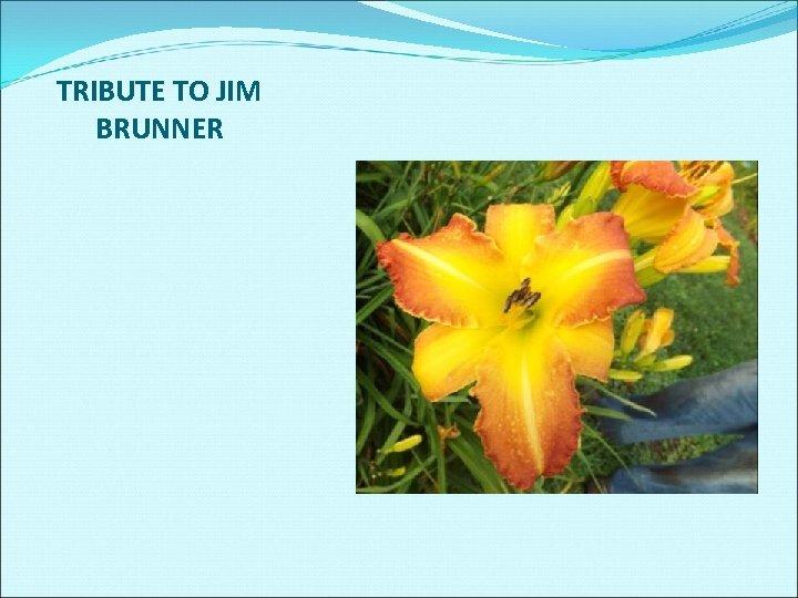TRIBUTE TO JIM BRUNNER