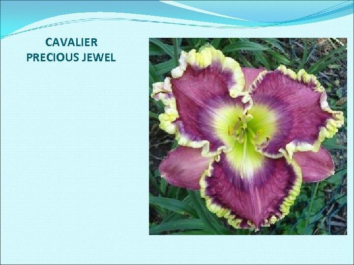 CAVALIER PRECIOUS JEWEL