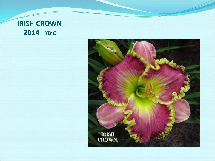IRISH CROWN 2014 Intro