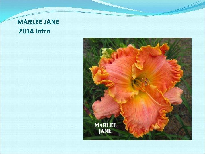 MARLEE JANE 2014 Intro
