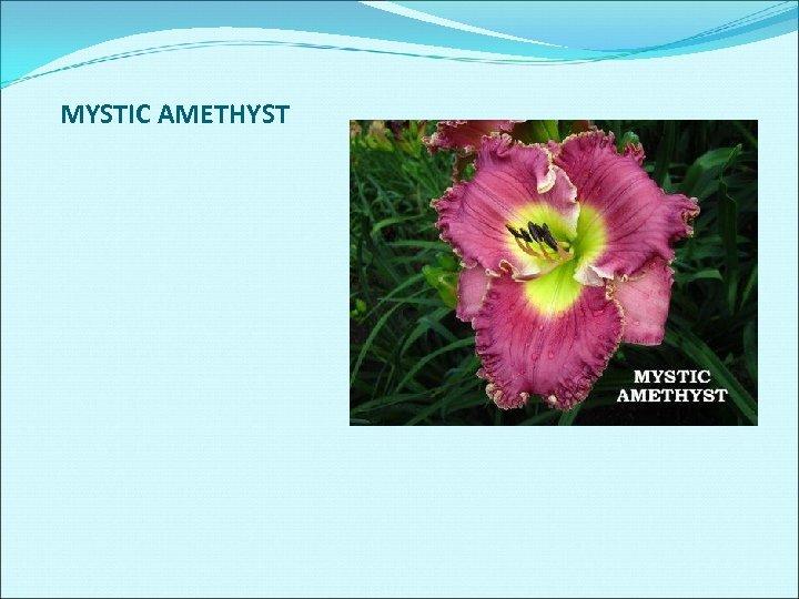 MYSTIC AMETHYST